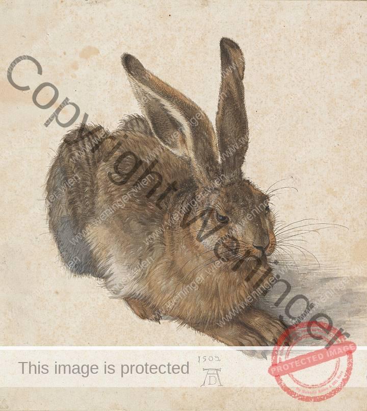 Albrecht Dürer: Feldhase (copyright: Albertina)