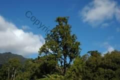 Neuseeland Paringa