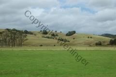 Neuseeland - bei Horeke