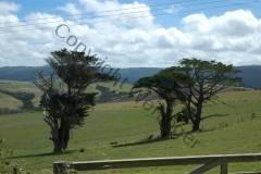Neuseeland - Dargaville