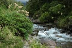 Neuseeland - Whakapapa Nature Walk
