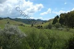 Neuseeland - Richtung Pipiriki