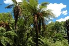 Neuseeland - Auckland Domain Park